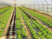 poljoprivreda_2.jpg
